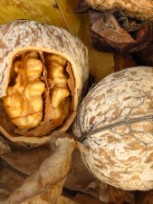 Грецкий орех:полезные свойства и народные рецепты