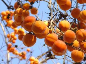 Народная медицина использует не только плоды, но и листья.