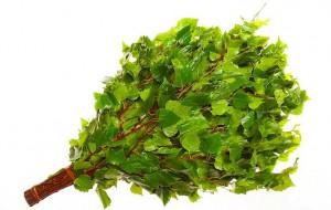 Ветви березы гибкие и прочные.